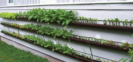 gutter garden 2 Eco DIY: recycle old gutters into a vertical garden