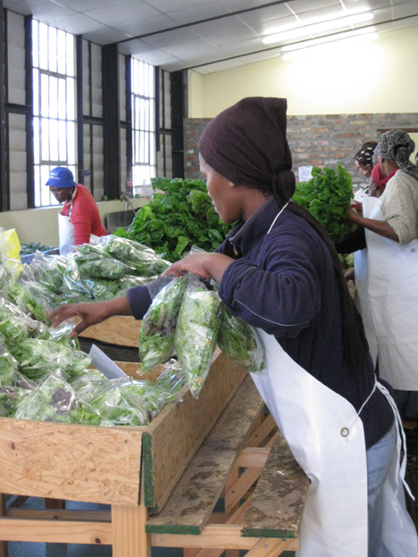 These vegetables are picked in the morning and delivered in the afternoon.  You won't find fresher.