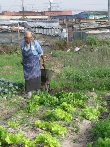 Mama Maggie transporting manure to her crops by wheelbarrow