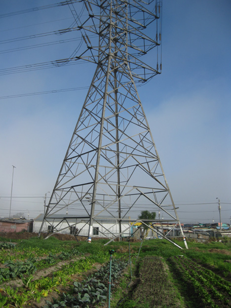 Fezeka community garden stands at the foot of a huge pylon