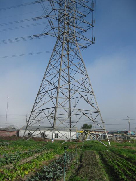 Fezeka community garden stands at the foot of a huge pylon